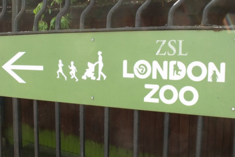 Gorilla escapes from London Zoo