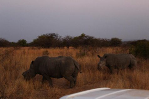 Rhinos we observed and studied while on the reserve.